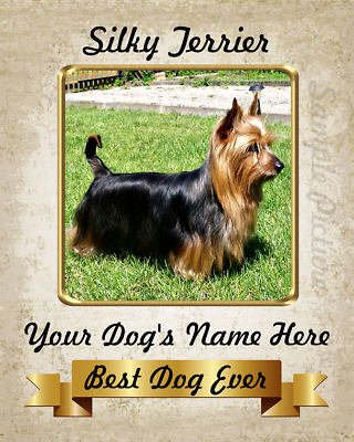 Silky Terrier Dog 8X10 Personalized Photo Picture Art Home Decor Custom