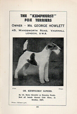 WIRE FOX TERRIER NAMED DOG AND PUPPIES OLD VINTAGE DOG PRINT FROM 1934