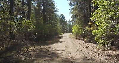 No Reserve!  Wooded 1.15 Acre Lot in Forest Lakes near Bayfield, Colorado