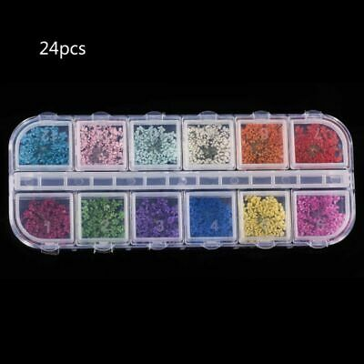 24Pcs Real Pressed Flower Anne's Lace Dried Flower Nail Resin Jewelry Making