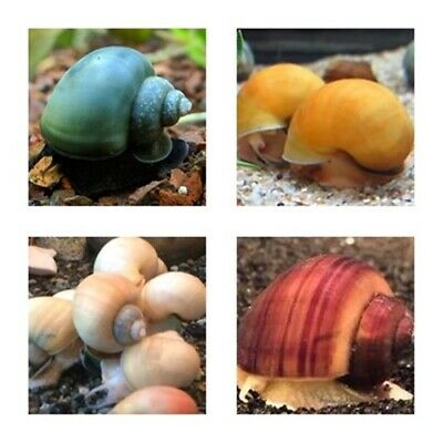 MIX color Mystery 3 or 5 or 10 Snails Live Snails SUPER PRICE!!!!
