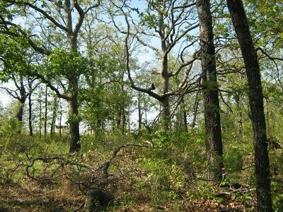 35 Acres of HUNTING LAND -  Hughes County Oklahoma / Why Lease when You can Own!