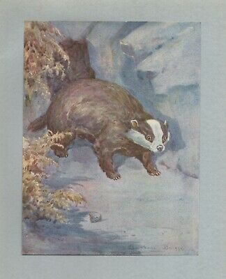 THE BADGER BEAUTIFUL ANTIQUE BOOKPLATE ART PRINT by BARBARA BRIGGS GREAT GIFT