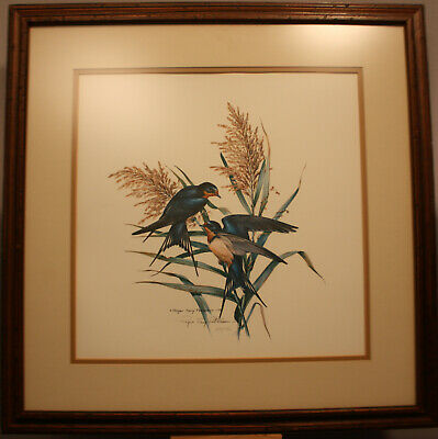 Roger Tory Peterson Barn Swallows Color Print - Hand Signed & Numbered