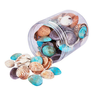 100-120x Natural Sea Shells Seashell with Hole for DIY Wind Chimes Ornament
