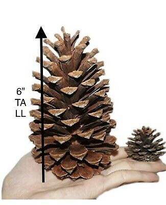 "4""5""6""Large Natural Pine Cone Christmas Tree Decorations Xmas Home Ornaments US"