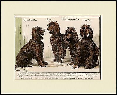 IRISH WATER SPANIEL TWO DOGS LOVELY DOG PRINT MOUNTED READY TO FRAME