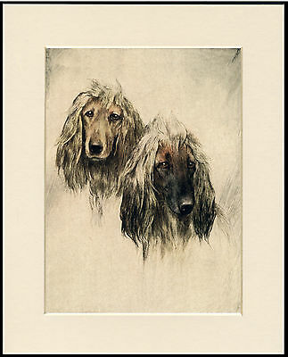 BASSET HOUND HEAD STUDY LOVELY DOG PRINT MOUNTED READY TO FRAME