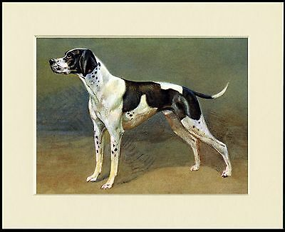 Pointer Standing Dog Lovely Print Mounted Ready To Frame
