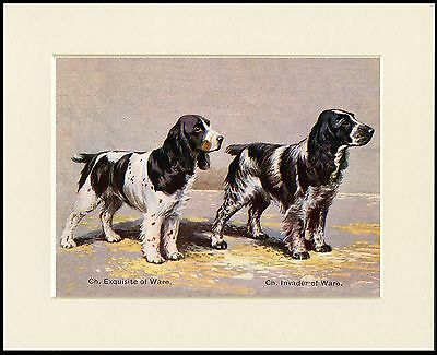 CLUMBER SPANIEL LOVELY DOG GREETINGS NOTE CARD DOG AND BIRD