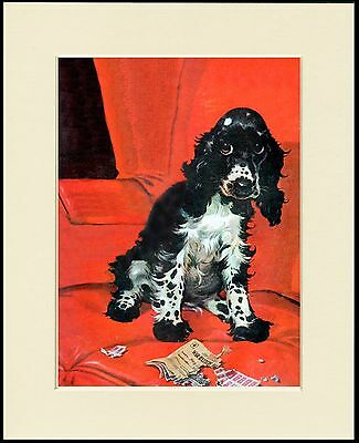 COCKER SPANIEL OUT IN THE RAIN LOVELY COMIC DOG PRINT MOUNTED READY TO FRAME