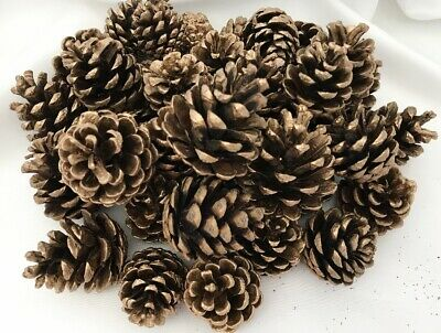 Gold Austriaca Pine Tree Cones Christmas Decoration Craft Approx 30