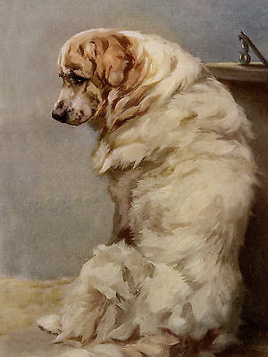 Pyrenean Mountain Dog Seated Lovely Greetings Note Card