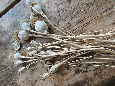24 English Dried Flower Seed Heads - Floral Design/Crafts etc