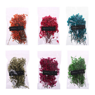 1 Bag Real Pressed Dried Flowers Floral For DIY Crystal Making Art Craft Decor