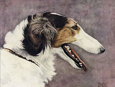 Borzoi Head Study Lovely Original Colour Art Dog Print Page From 1934