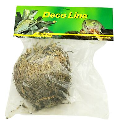 Lucky Reptile DL-RJ Rose of Jericho Live Plant