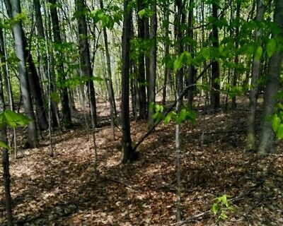 1.5 acres Beautiful wooded land in Pennsylvania PA - 2 hrs from NYC New York