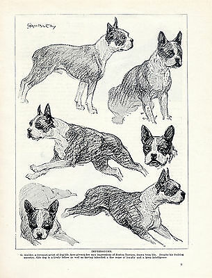 BORDER TERRIER LOVELY ORIGINAL VINTAGE DOG PRINT PAGE FROM 1934 BY VERE TEMPLE