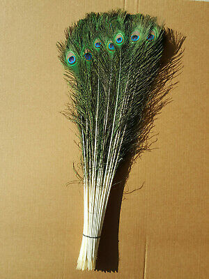 10-50 inches Natural Peacock Feathers with Big Natural Eyes 10-100 Pcs from GA