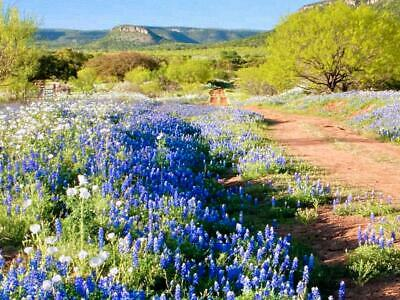 120 Acre Ranch In West Texas ! Rare ! Secluded ! Buildable ! Spectacular !