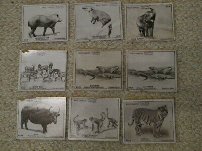 Vintage Wills's Vice Regal Cigarettes Cards - Zoological Series Photos - 1922