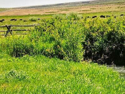52.08 Acre West Texas Wonder Ranch ! Very Rare ! 3 Wonder Ranch ! Location !