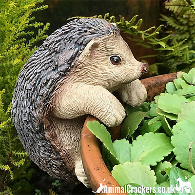 Cute HEDGEHOG POT HANGER novelty resin garden ornament decoration Hog lover gift