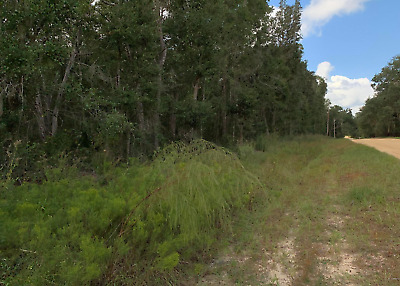 Rare 1/10 Acre Florida Lot! Near Lake! Power, Road & Legal Address! No Reserve!