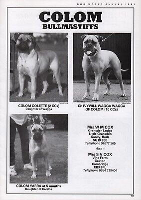 BULLMASTIFF DOG BREED KENNEL ADVERT PRINT PAGE COLOM KENNELS DOG WORLD 1990
