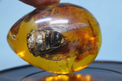 Collectable Decorative Handwork Amber Inlay Cicada Beautiful Auspicious Pendant