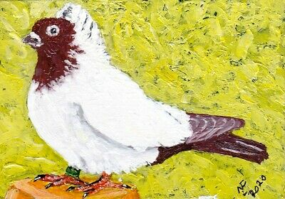 ACEO Original Brown Nun pigeon breed by artistnelson