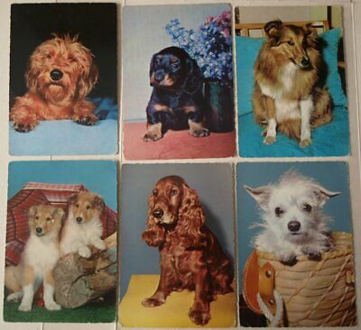 6 Vintage Postcards - Dogs Puppies (2)