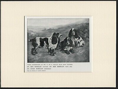 Cocker Spaniel Named Dogs Old Antique 1912 Dog Print Ready Mounted