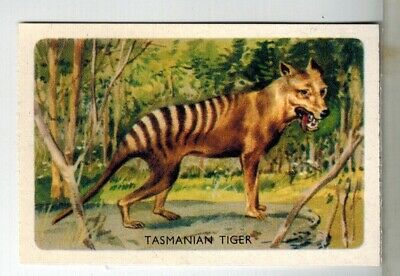 Shell Oils Project Cards - Animals Series Collector Cards - #47 Tasmanian Tiger
