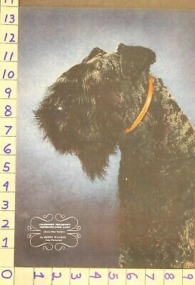 1942  Dog Canine Kerry Blue Terrier Champ Breeder Waxman Photo Print Ru81