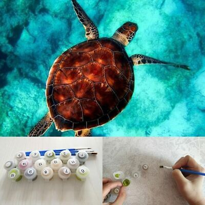 Classical Turtle Propylene Paint By Numbers Kits For Adults DIY Painting Tools