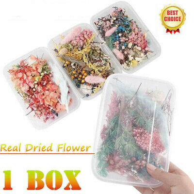 1Box Real Dried Leaf Flowers Plant Herbarium Crafts Jewelry Making Resin Casting