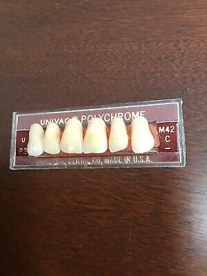 Univac Polychrome Anterior Denture Teeth U P3 M42 C