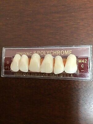 Univac Polychrome Anterior Denture Teeth U P1 M42 C