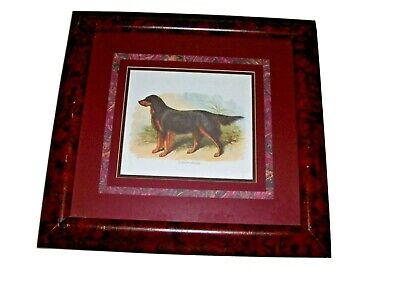 Gordon Setter Dog Print Framed