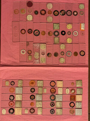 52 Microscope Slides  1883 1/2 Labeled Most By Stockwell
