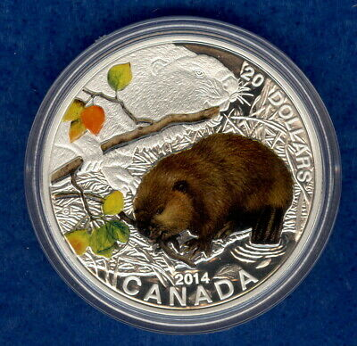 2014 $20 Proof Canadian Baby Animals: The Beaver Colorized Silver Coin