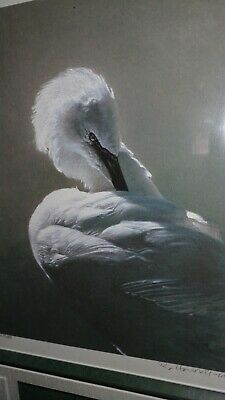 Ray Harris-Ching PREENING EGRET Bird Painting Art SIGNED LE GICLEE Print framed