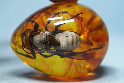 Decorative Exquisite Amber Inlay Insects Precious Auspicious Beautiful Pendant