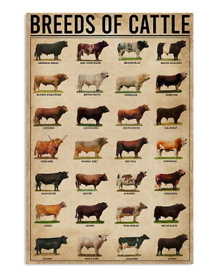 Breeds Of Cattle Knowledge Poster No Frame