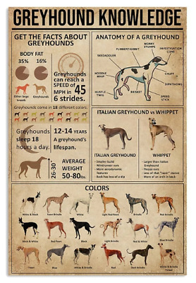 Greyhound Knowledge Poster No Frame