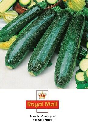 Thompson /& Morgan The Taste of Italy Courgette Zucchino Verde Di Milan 50 Seed