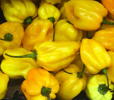 Long Bearing Hot Chili Peppers Seeds 0.50gr to 5.0gr Cayenne Pepper Seed