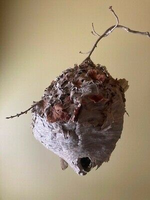 Paper Wasp Hornets Nest-Outdoor, cabin, rustic decor